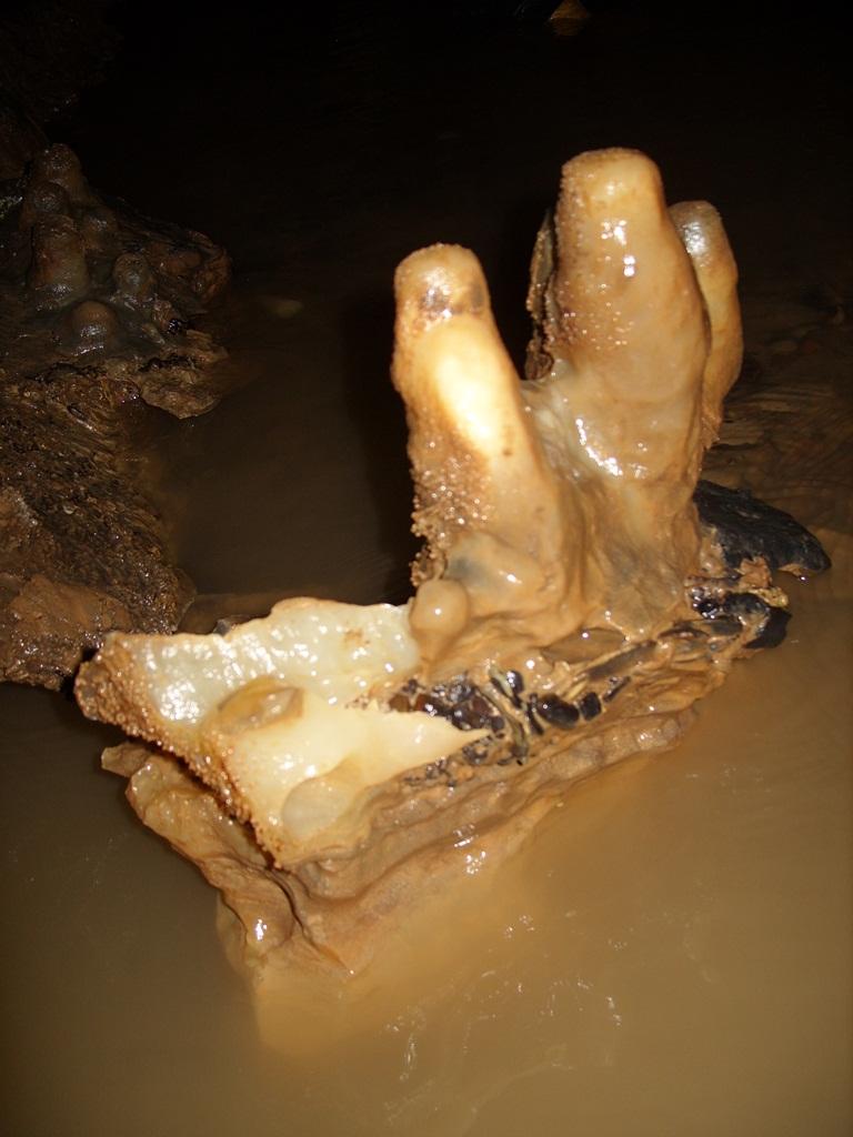 Stalagmites on basalt